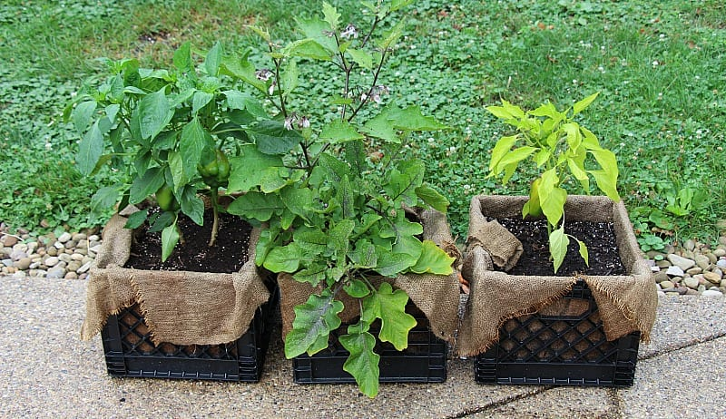 Milk crates for your plants